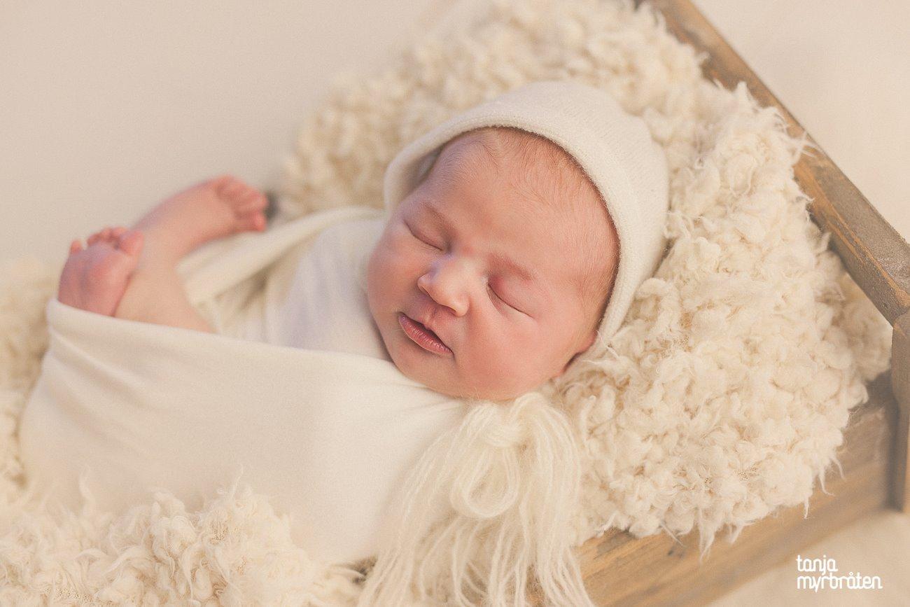 nyfødtfotografering vestfold
